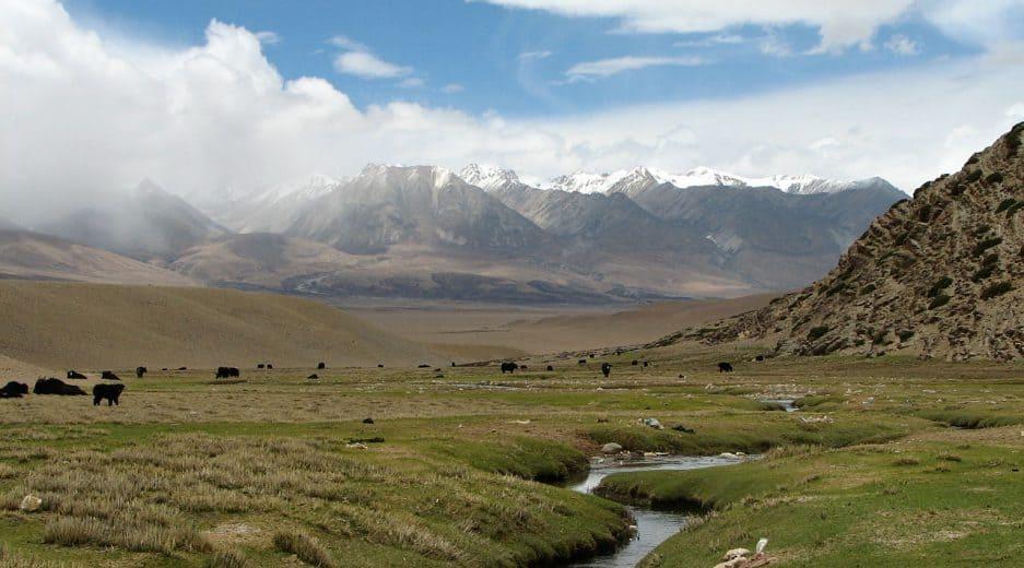 Eine Weidelandschaft mit Tieren, im Hintergrund sind Berge und blauer Himmel zu sehen