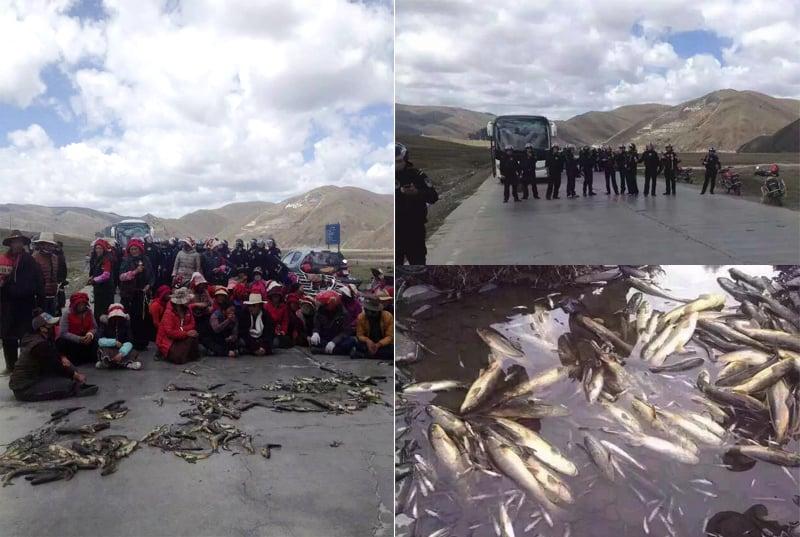 Fischbestände sterben, weil das Wasser verseucht wird. Aufnahme aus Dartsedo in Tibet. (c)TPI