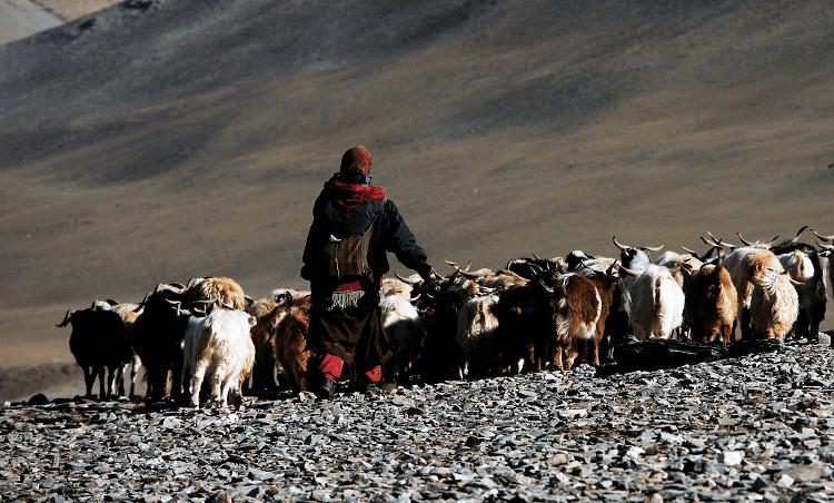 Tibets Nomaden brauchen Ihre Unterstützung